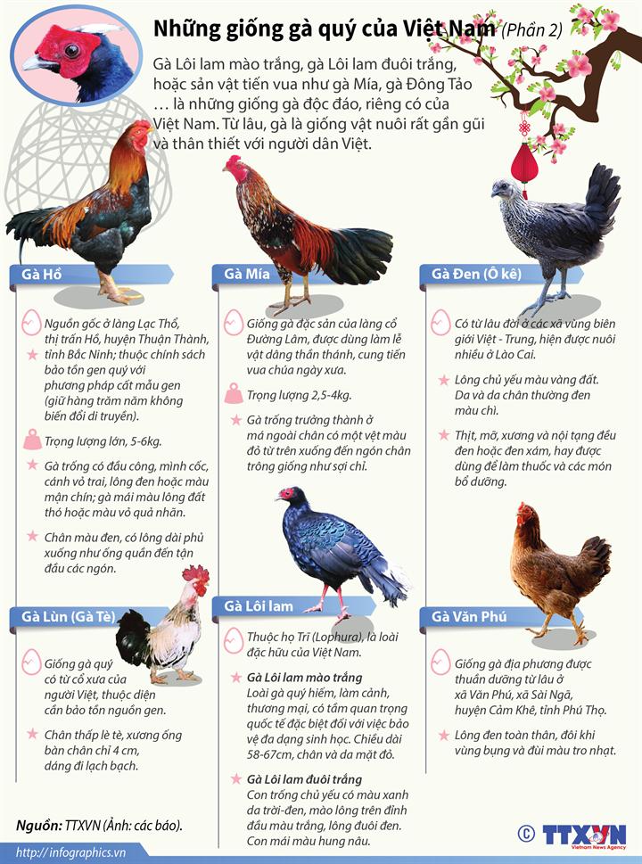 Những giống gà quý của Việt Nam (Phần 2)