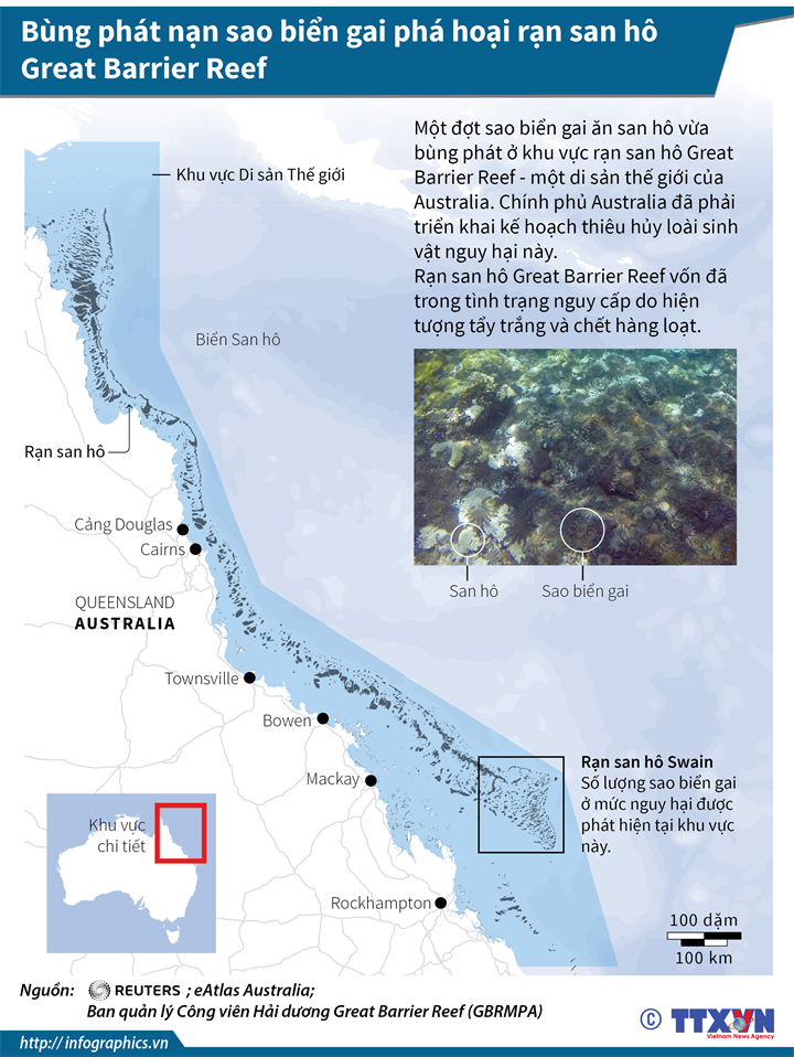 Bùng phát nạn sao biển gai phá hoại rạn san hô Great Barrier Reef