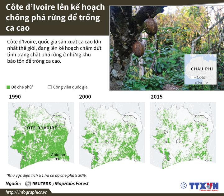 Côte d'Ivoire lên kế hoạch chống phá rừng để trồng ca cao
