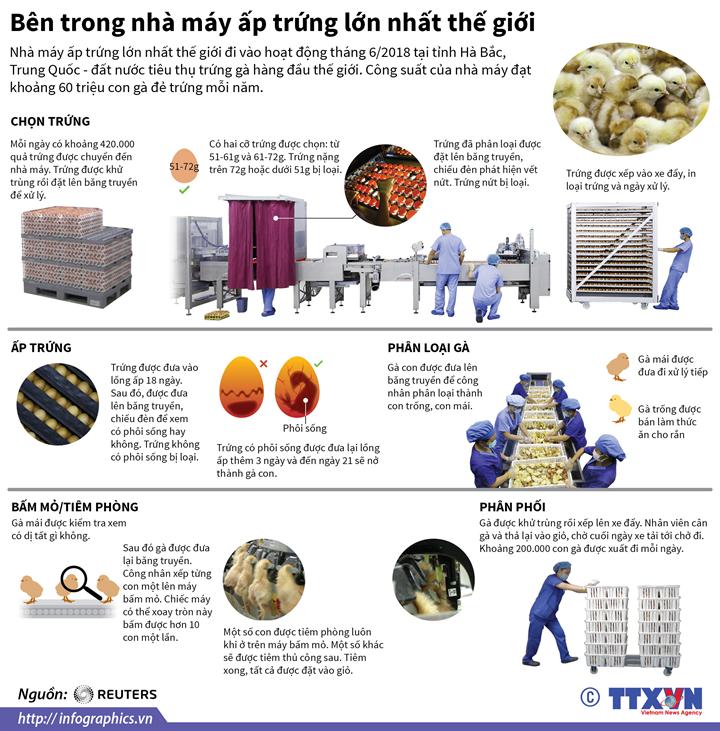 Bên trong nhà máy ấp trứng lớn nhất thế giới