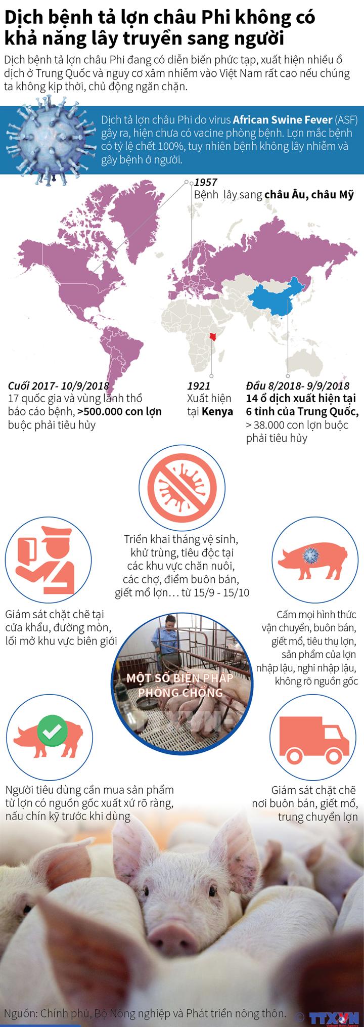 Dịch bệnh tả lợn châu Phi không có khả năng lây truyền sang người