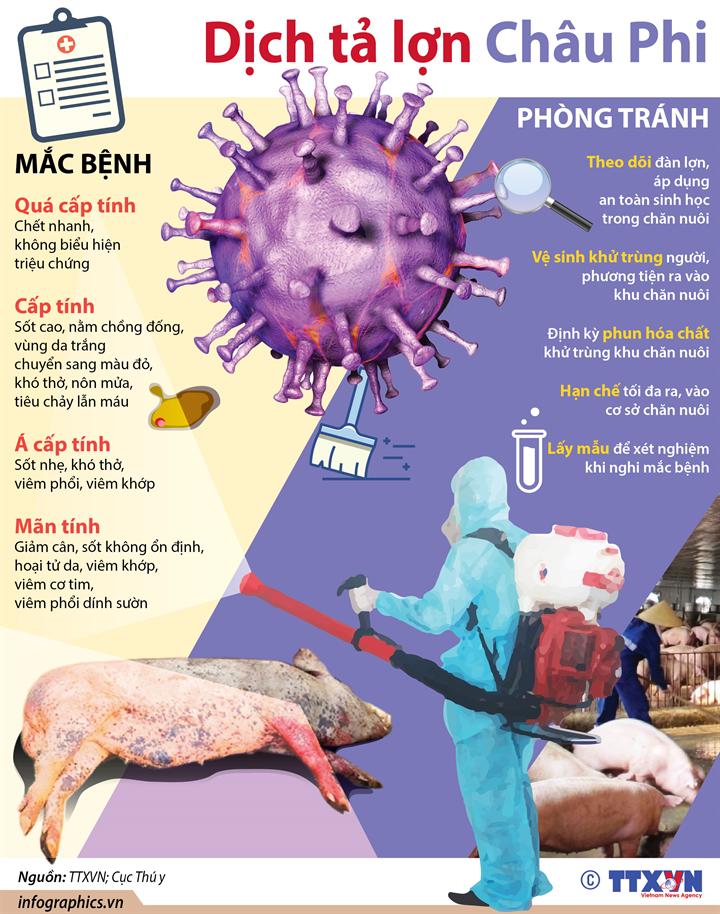 Biểu hiện và cách phòng tránh dịch tả lợn Châu Phi