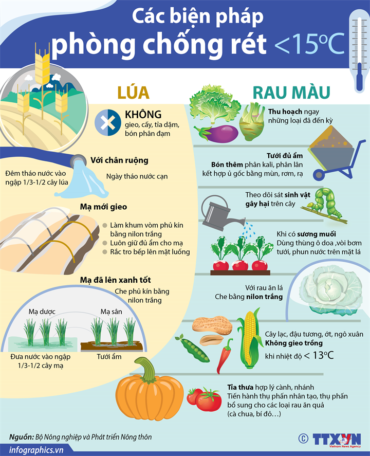 Các biện pháp phòng chống rét cho lúa và rau màu