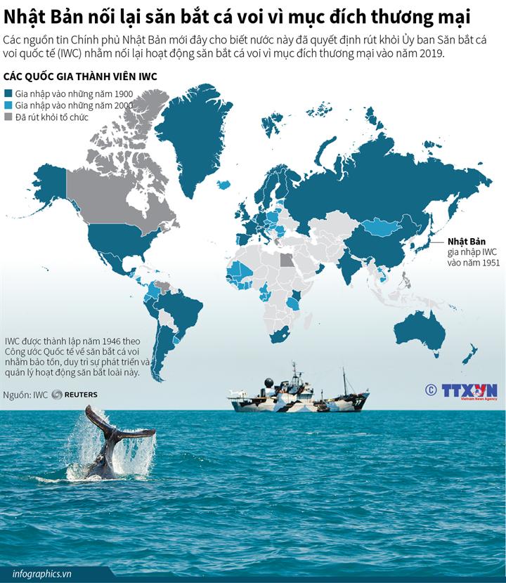 Nhật Bản nối lại săn bắt cá voi vì mục đích thương mại