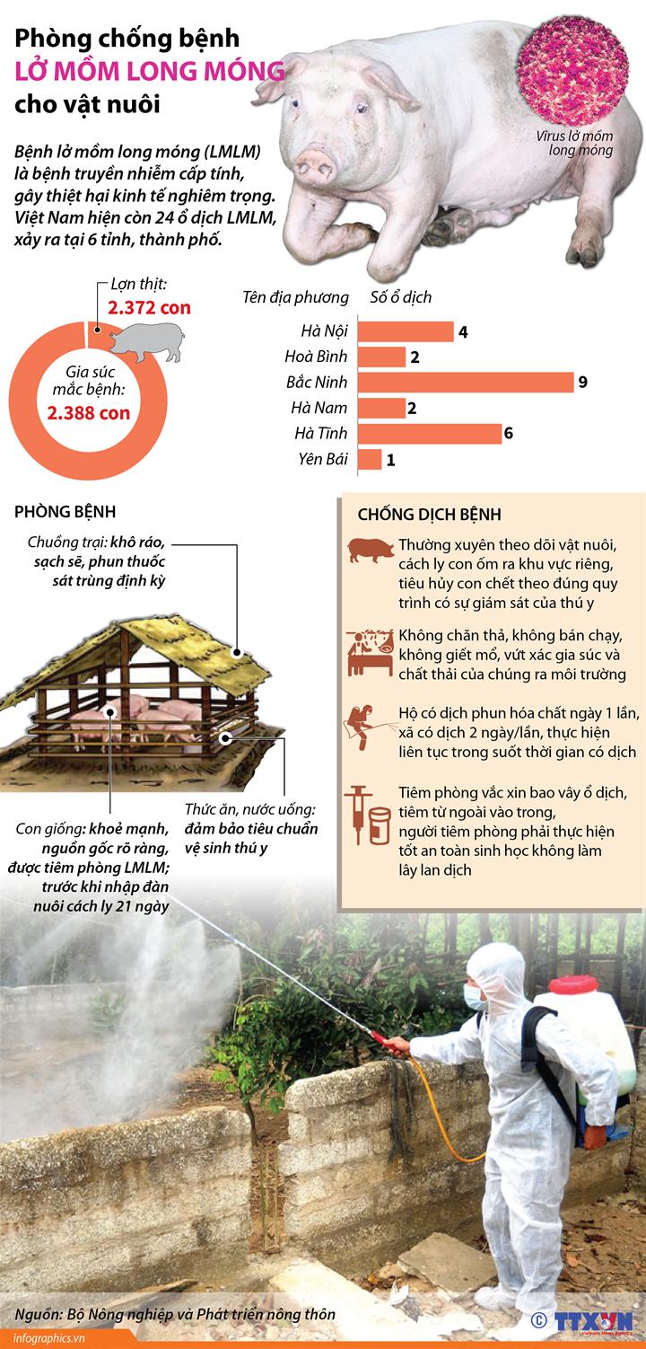 Phòng chống bệnh lở mồm long móng cho vật nuôi