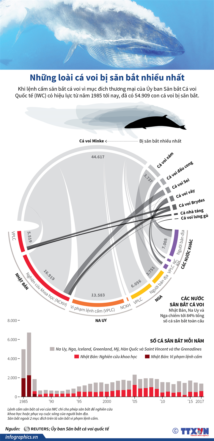 Những loài cá voi bị săn bắt nhiều nhất