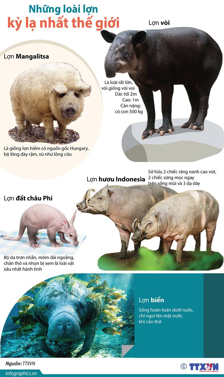 Những loài lợn kỳ lạ nhất thế giới