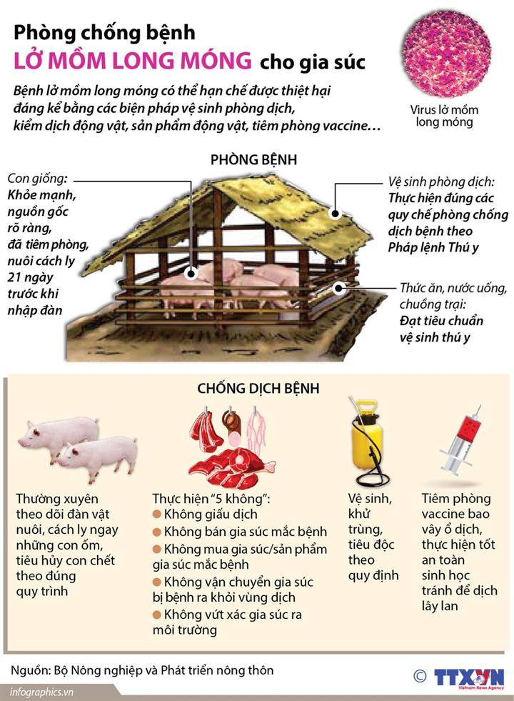 Phòng chống bệnh lở mồm long móng cho gia súc