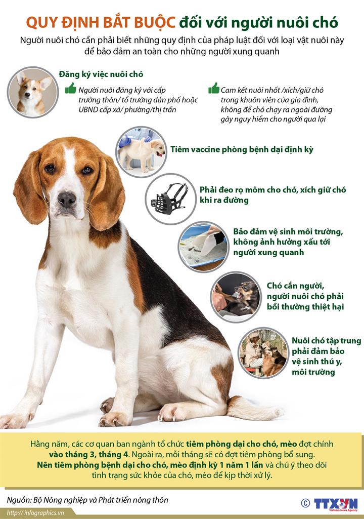 Quy định bắt buộc đối với người nuôi chó