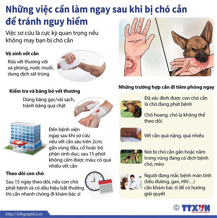 Những việc cần làm sau khi bị chó cắn để tránh nguy hiểm