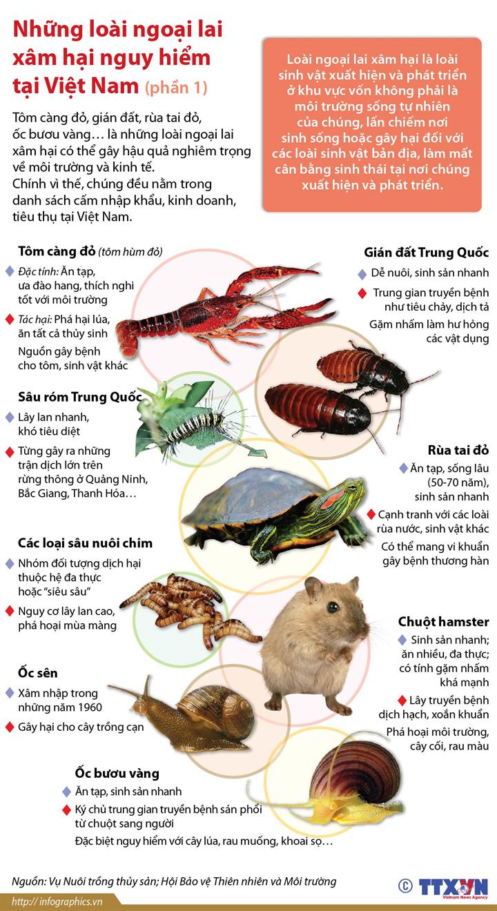 Những loài ngoại lai xâm hại nguy hiểm tại Việt Nam (Phần 1)