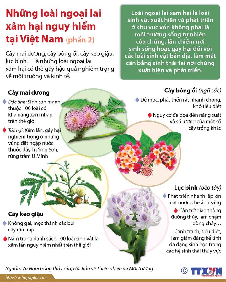 Những loài ngoại lai xâm hại nguy hiểm tại Việt Nam (Phần 2)