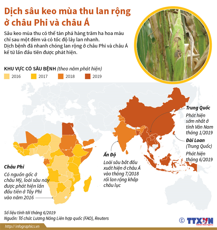 Dịch sâu keo mùa thu lan rộng ở châu Phi và châu Á