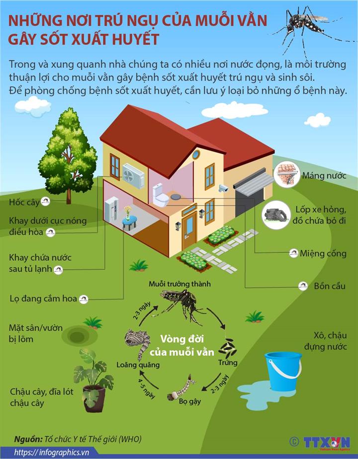 Những nơi trú ngụ của muỗi vằn gây sốt xuất huyết