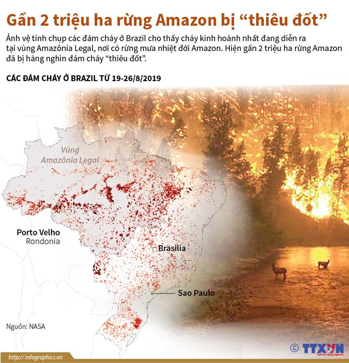 """Gần 2 triệu ha rừng Amazon bị """"thiêu đốt"""""""