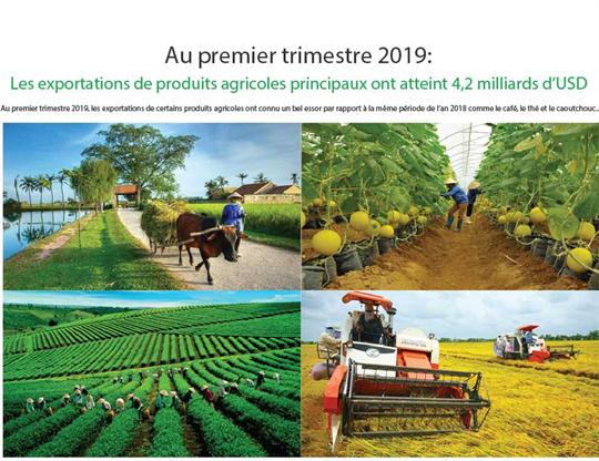 Les exportations de produits agricoles principaux ont atteint 4,2 milliards d'USD au 1er trimestre 2019