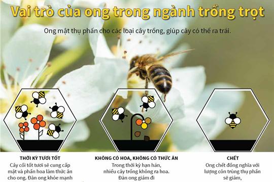Vai trò của ong trong ngành trồng trọt