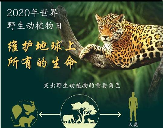 2020年世界野生动植物日:维护地球上所有的生命