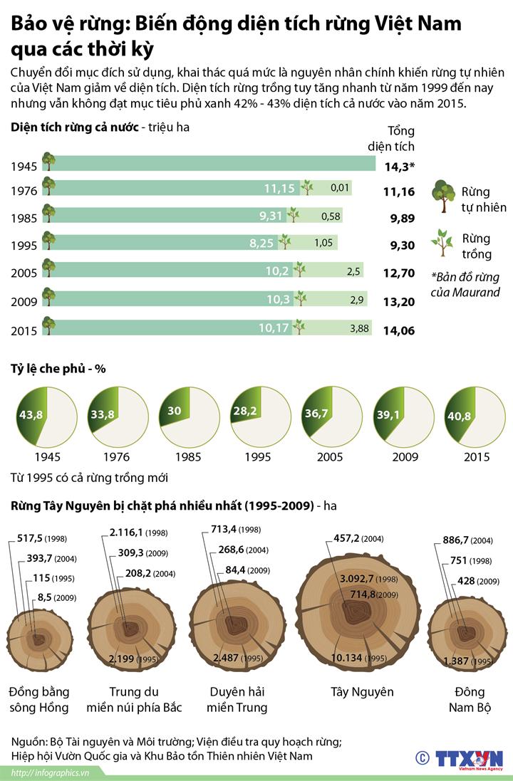 Bảo vệ rừng: Biến động diện tích rừng Việt Nam qua các thời kỳ