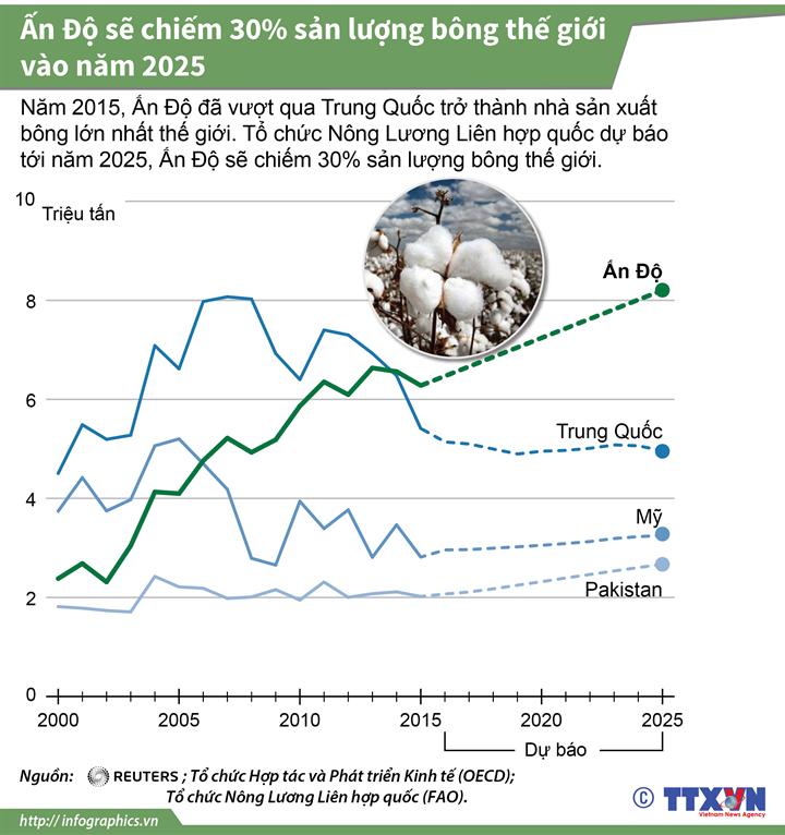 Ấn Độ sẽ chiếm 30% sản lượng bông thế giới vào năm 2025