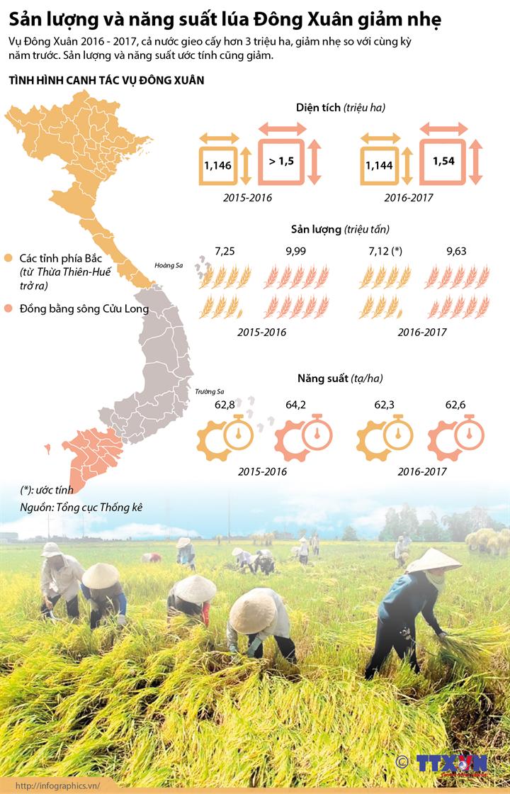 Sản lượng và năng suất lúa Đông Xuân giảm nhẹ