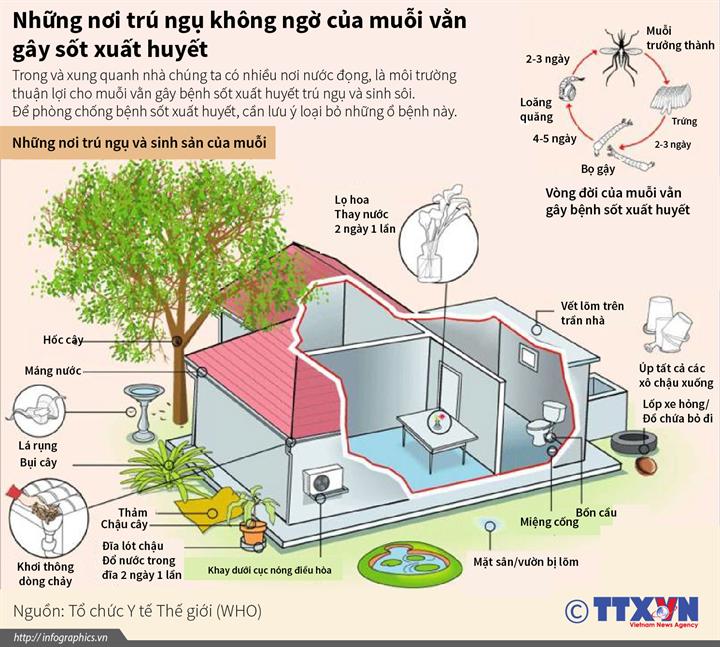Những nơi trú ngụ không ngờ của muỗi vằn gây sốt xuất huyết