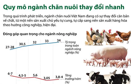 Quy mô ngành chăn nuôi thay đổi nhanh