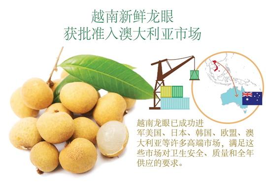 越南新鲜龙眼获批准入澳大利亚市场