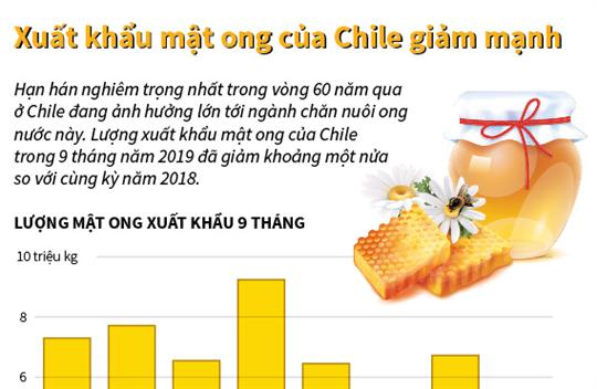 Xuất khẩu mật ong của Chile giảm mạnh