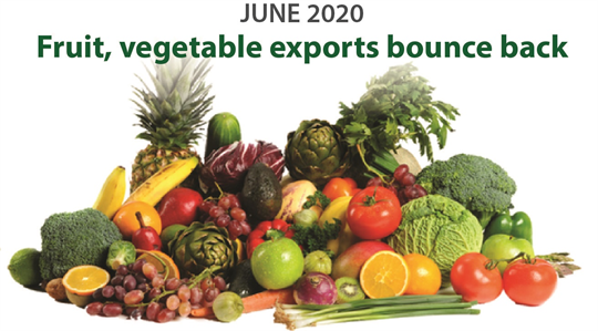 Fruit, vegetable exports bounce back in June  2020